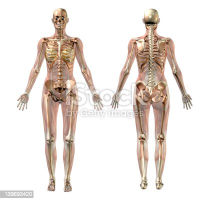 istock Female Skeleton with Transparent Muscles 139693420