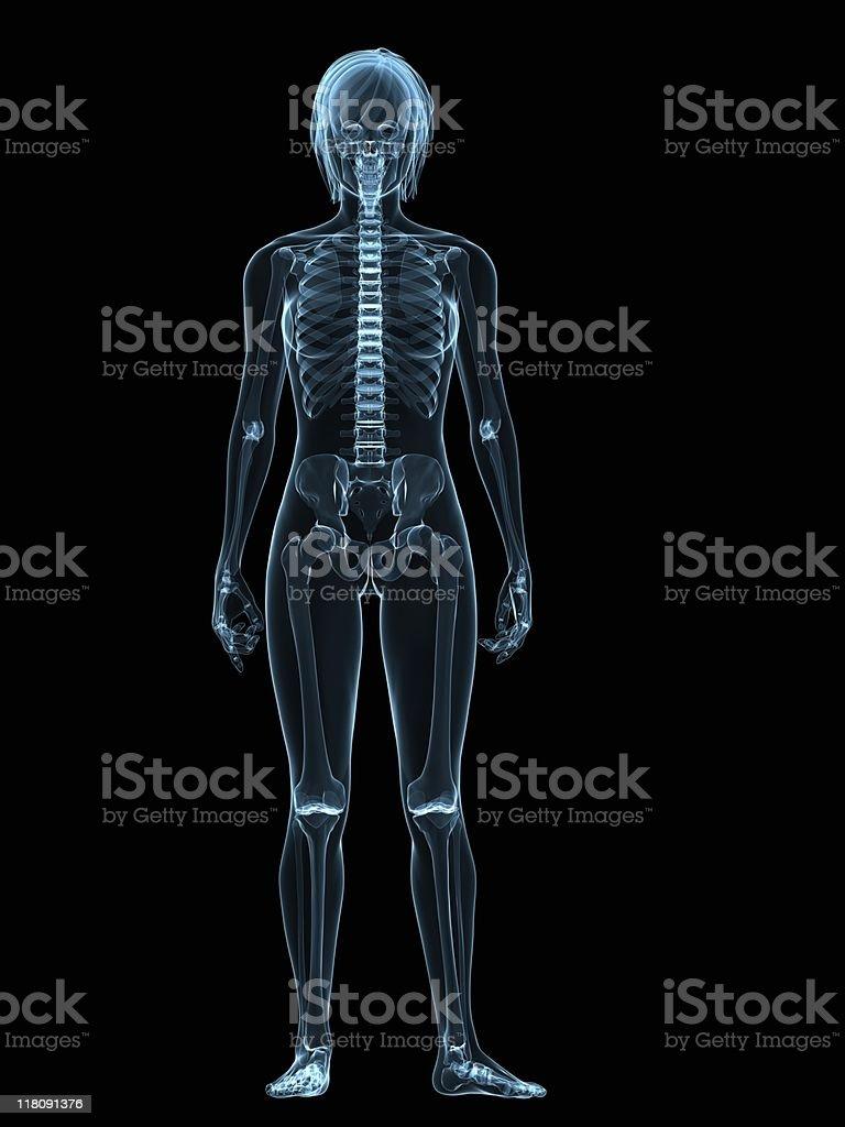 female skeleton -xray royalty-free stock photo
