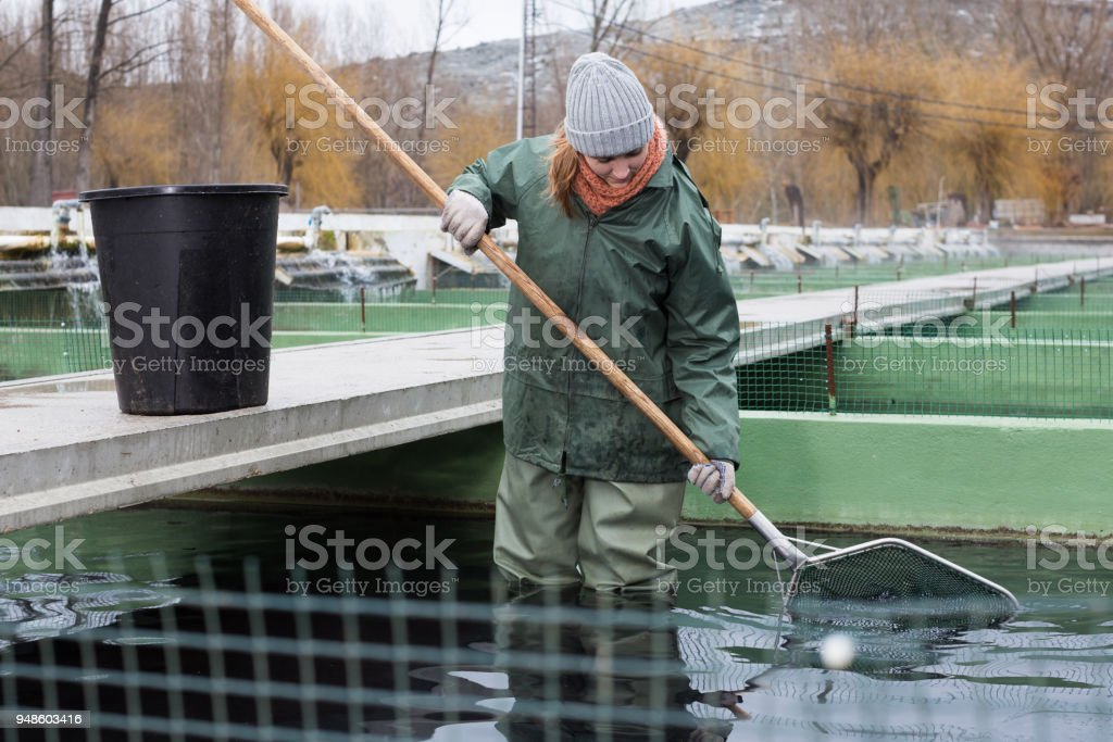 Female Standing In Fish Tank Fishing For Sturgeon With