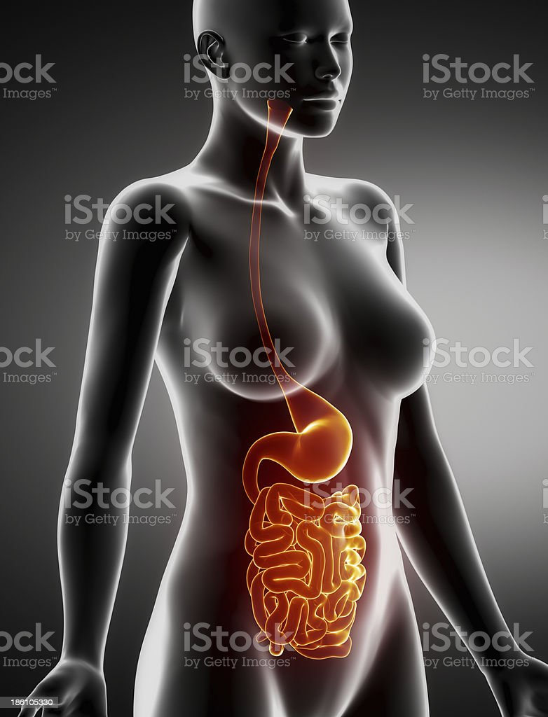 Female Stomach And Intestine Anatomy Xray Lateral View Stock Photo ...