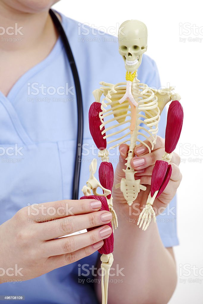 Female student on anatomy class in blue uniform royalty-free stock photo