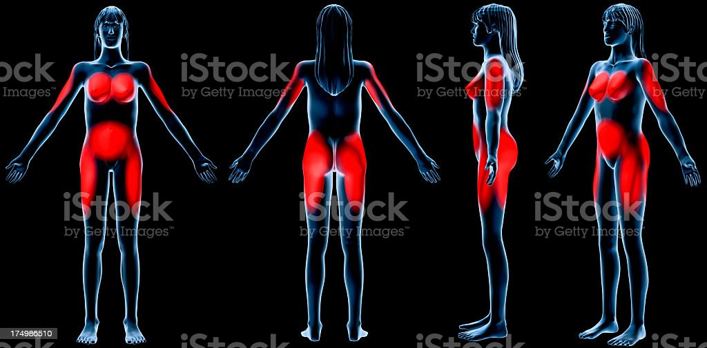 Female subcutaneous/visceral fat zones stock photo