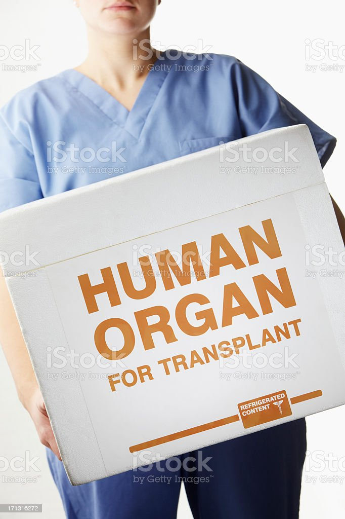Female surgeon carrying transplant organ box stock photo