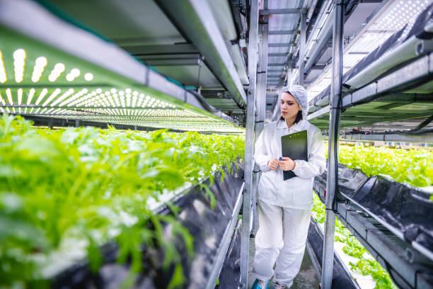 Weiblicher Nachhaltigkeitsspezialist Noting Indoor Crop Wachstum – Foto