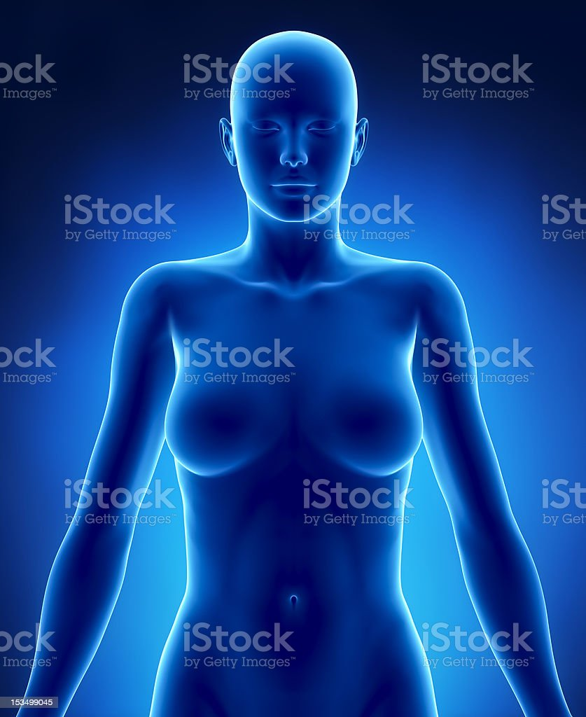 Female torso in anatomical position anteriror view royalty-free stock photo