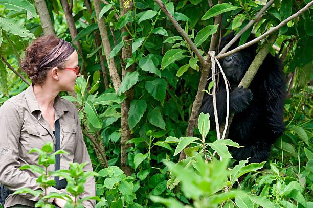 Female tourist observing a juvenile mountain gorilla picture id168315322?b=1&k=6&m=168315322&s=612x612&w=0&h=lqcqfsctbcgh4ewpdcawn8rnqykzynxifgn4i09rpvw=