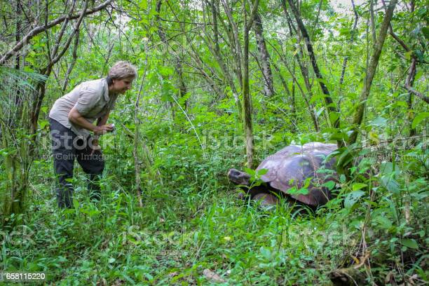 Female tourist with galapagos giant tortoise in natural forest picture id658115220?b=1&k=6&m=658115220&s=612x612&h=wc kcme3tremkzq1s rg5ejo2q9olszzjclobpsr3a0=