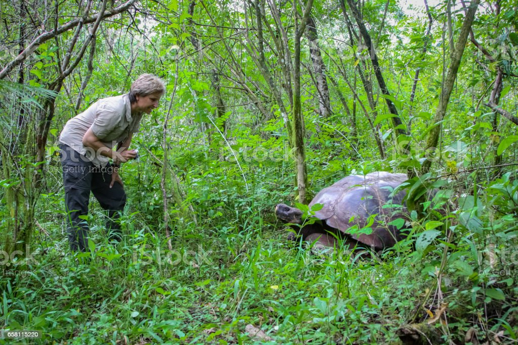 Female tourist with Galapagos giant tortoise in natural forest habitat – Foto