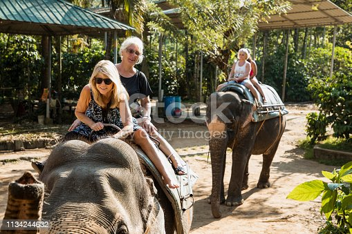 A small group of caucasian women can be seen sitting on indian elephants, they are having fun together on their trip to Kerala, India. They are wearing backpacks.