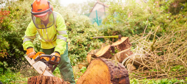 female tree surgeon - tree surgeon stock photos and pictures