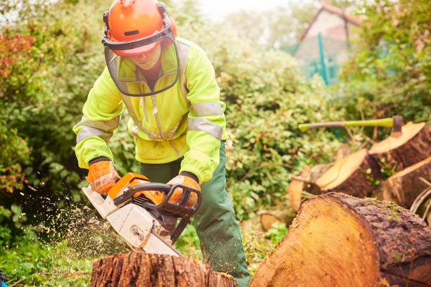 female tree surgeon - chainsaw stock photos and pictures