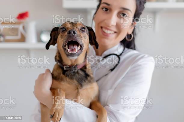 Female vet with a dog picture id1205349169?b=1&k=6&m=1205349169&s=612x612&h=rd3tsvcazelnmeycnmyzukxxcaqsa9vfadtgwyo1qro=