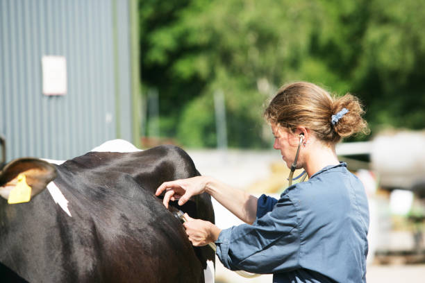 Female veterinarian at work stock photo