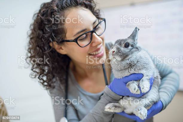 Female veterinarian holding a bunny for a checkup picture id629413474?b=1&k=6&m=629413474&s=612x612&h=7cw n420jgzavy lvp4ud zbenzxoxy4rfz i4qz1ha=