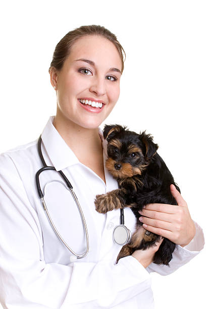 Female veterinarian holding a young puppy in her arms stock photo