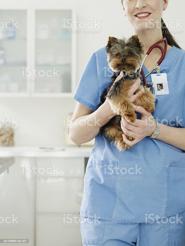 Female veterinarian holding Yorkshire terrier puppy foto royalty-free