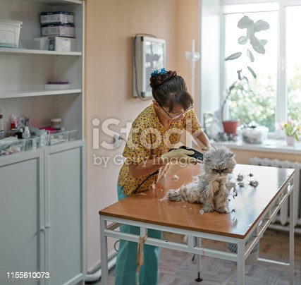 Middle aged woman is cutting the overgrown hair of Persian cat. The cute woman veterinarian is using the hair clipper. The cat is sitting on an examination table, it is dissatisfied. Shooting in a veterinary office