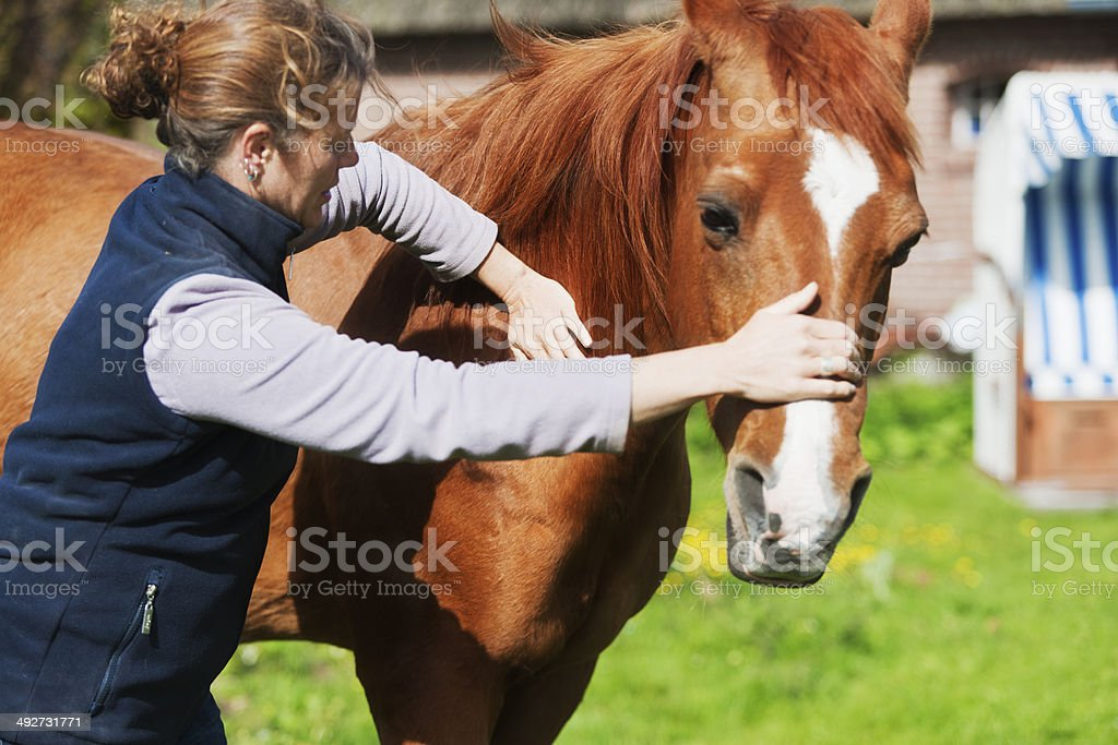 Female veterinarian performing chiropractics stock photo
