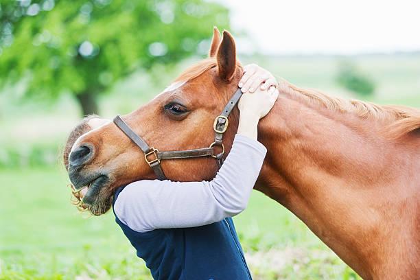 veterinario femmina eseguendo chiropractics - terapia alternativa foto e immagini stock