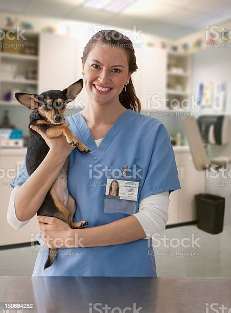 Female veterinarian with small dog picture id150684282?b=1&k=6&m=150684282&s=612x612&h=inxjjznxnkc6ovfu3td da3q5woon8afbez7wmlfroa=