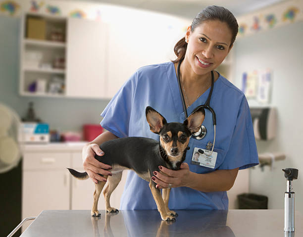 Female veterinarian with small dog picture id150684288?b=1&k=6&m=150684288&s=612x612&w=0&h=xzlu9ciav04sruxkreglcdbfw15s6bwo2v mlds2tvu=