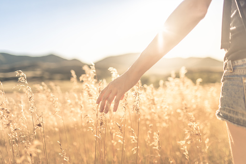 523172398 istock photo Female walking on open field at sunset softly brushing her hand over tall grass. 1175112135