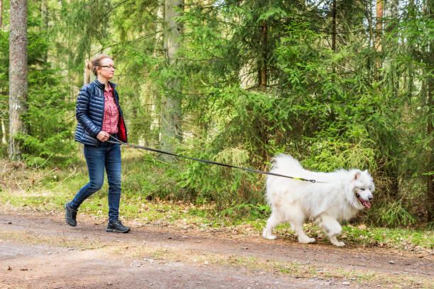 female walking with dog in forest - leinenhosen frauen stock-fotos und bilder