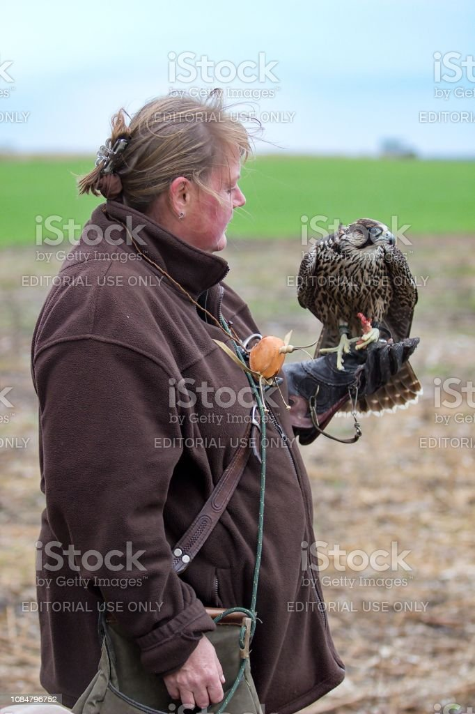 Female with falcon stock photo