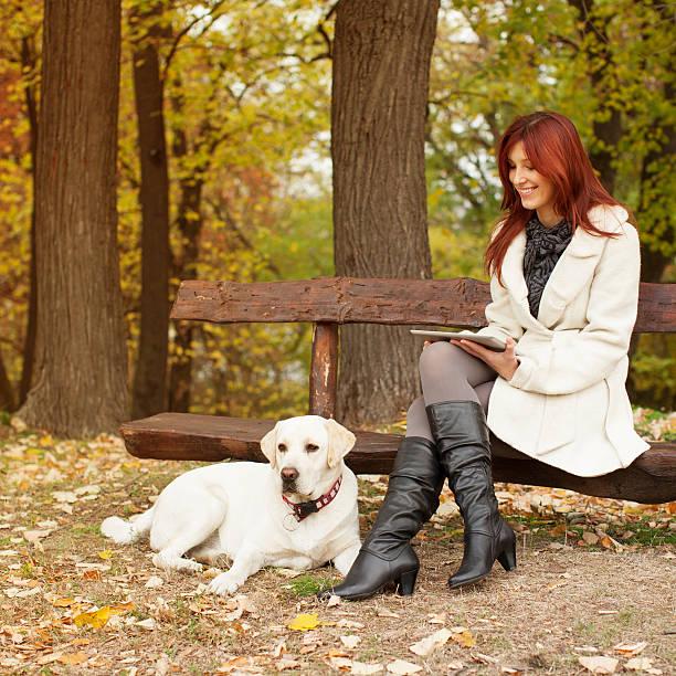 frau mit ihrem hund labrador und arbeiten auf tablet pc - marko skrbic stock-fotos und bilder