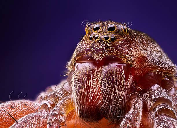 Female wolf spider portrait - foto de acervo