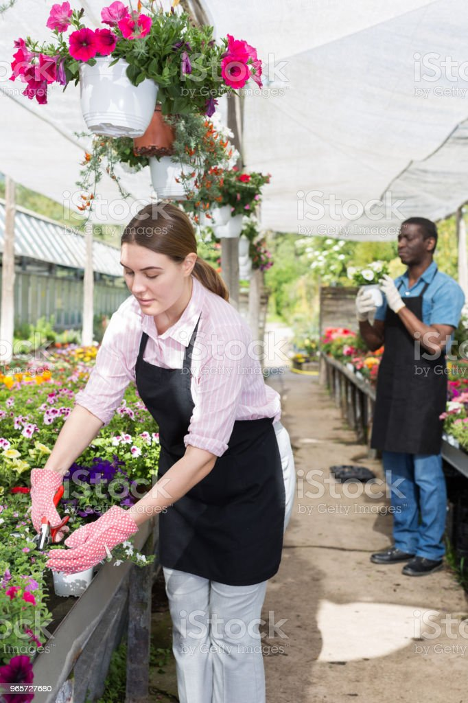 Female worker checking flowers in glasshouse - Royalty-free Agriculture Stock Photo