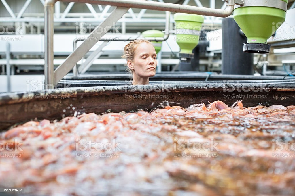 Female worker examining fishes at aquaculture stock photo