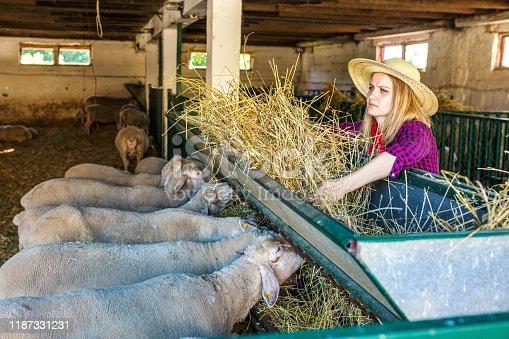 Female worker in sheep fam
