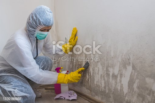 Female worker of cleaning service removes mold from wall using spray bottle with mold remediation chemicals, mold removal products and scraper tool.