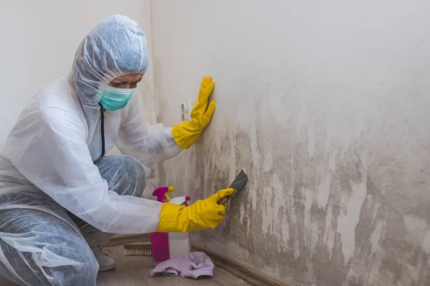 vrouwelijke werknemer van de reinigingsdienst verwijdert schimmel uit de muur met behulp van spuitfles met schimmel sanering chemicaliën en schraper tool. - schimmel stockfoto's en -beelden