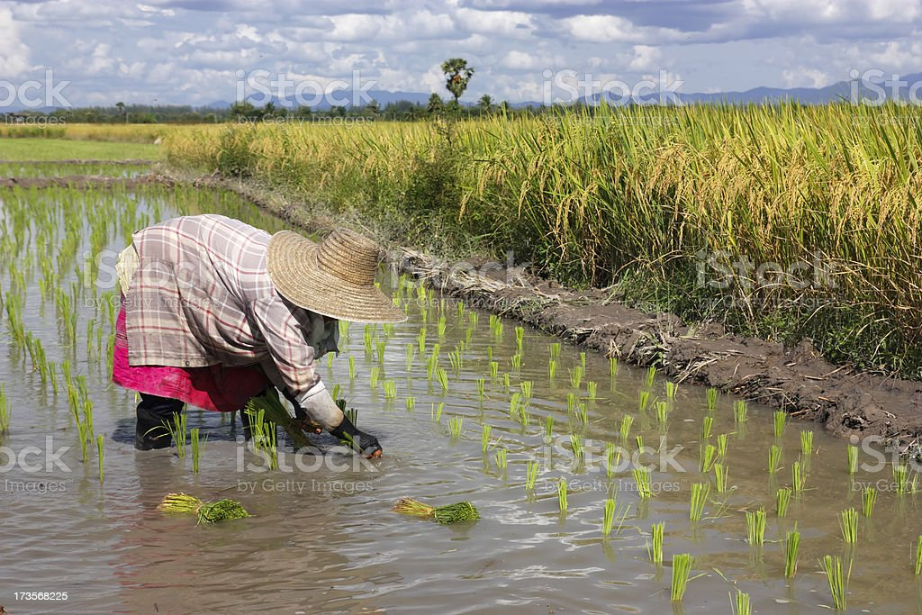 Female worker - Royalty-free Agriculture Stock Photo