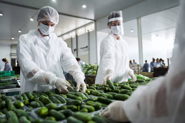 Female workers involved in packing fresh vegetables stock photo