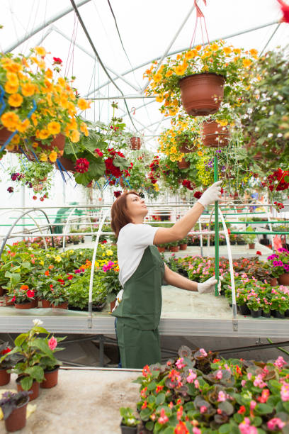 Female working at garden center. stock photo