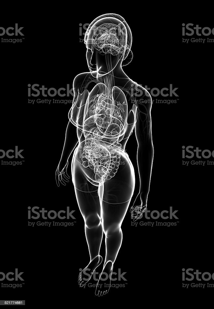 Female x-ray digestive and nervous system artwork stock photo