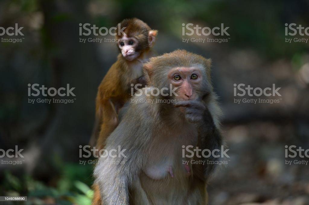 Frauen und seiner baby Affe – Foto