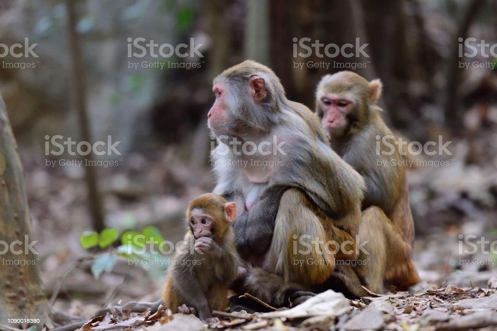 Weibchen Affe und sein baby – Foto