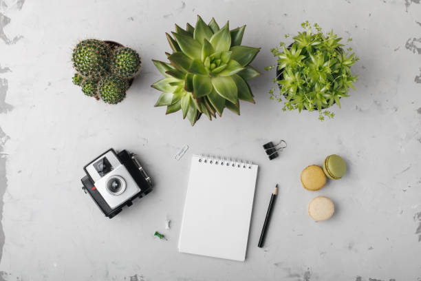 Feminine desk workspace with succulents, cactus, retro camera, diary and macaroons on light background. stock photo
