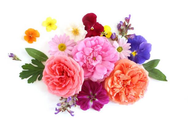 vrouwelijke bloemen samenstelling. boeket van eetbare wilde en tuin bloemen en kruiden. oude rozen, salie, viooltje, daisy, mallow en geranium bloemen en bladeren. plat lag, top uitzicht. - boeket stockfoto's en -beelden