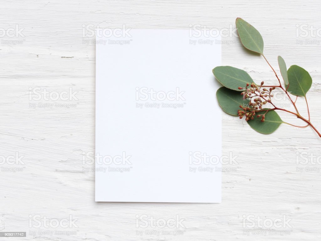Feminine wedding desktop mock-up with blank paper card and Eucalyptus populus branch on white shabby table background. Empty space. Styled stock photo, web banner. Flat lay, top view stock photo