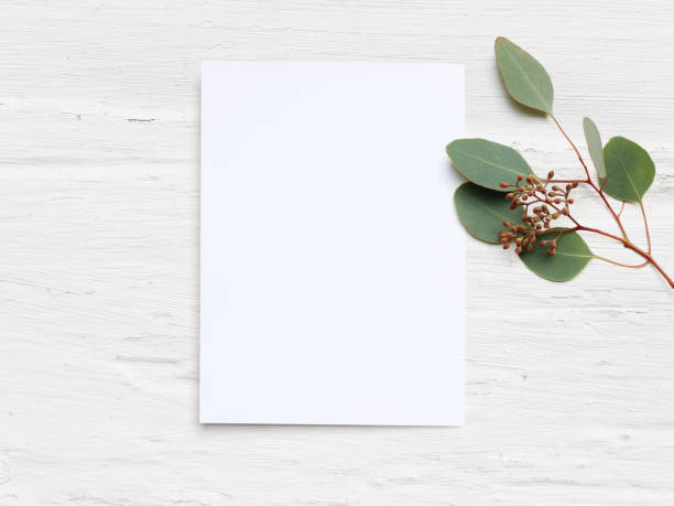 feminine wedding desktop mock-up with blank paper card and eucalyptus populus branch on white shabby table background. empty space. styled stock photo, web banner. flat lay, top view - foto di matrimonio foto e immagini stock
