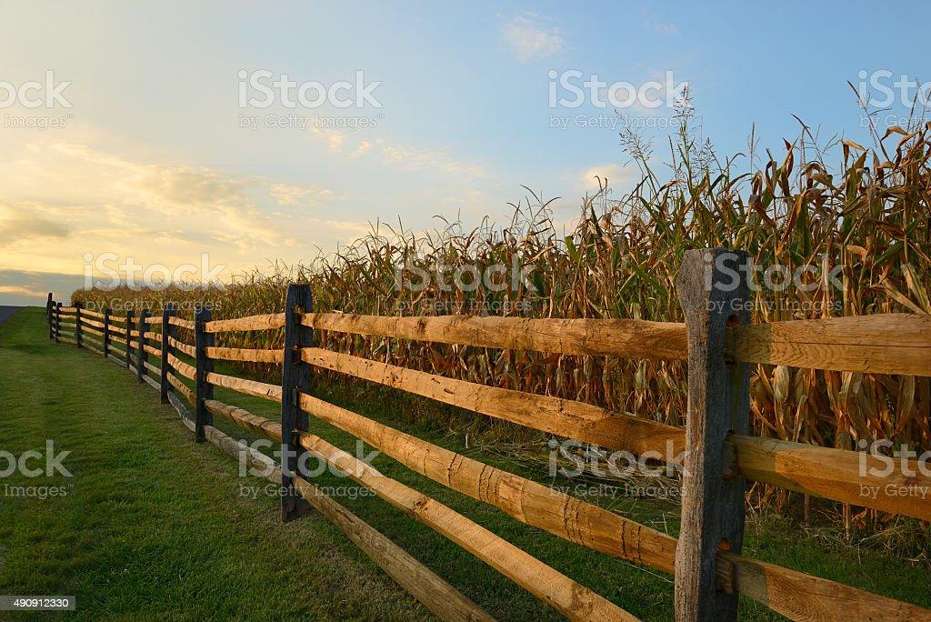 Fence Along Corn Field at Sunset stock photo