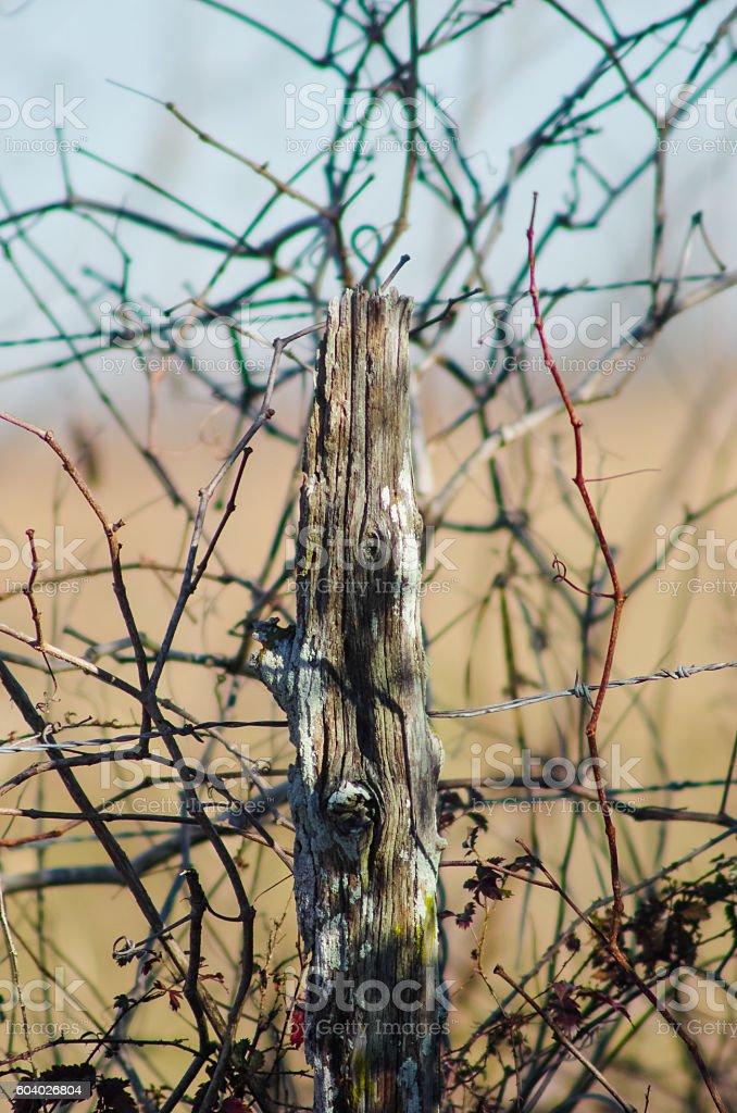 Fence and bramble stock photo