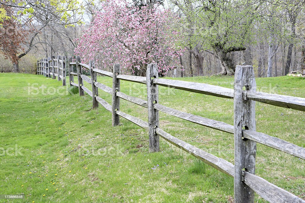Fence and flower royalty-free stock photo