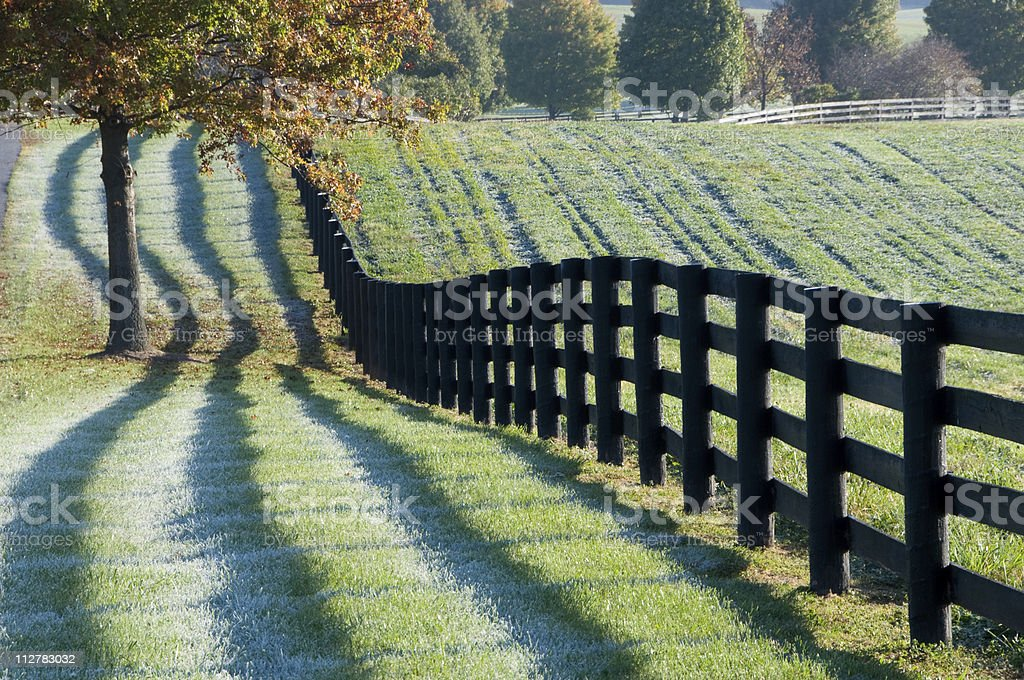 Fence and shadows in the early morning royalty-free stock photo