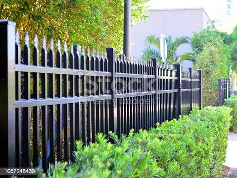 Fence and Shrub